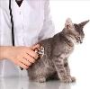 Ветеринарные клиники в Бакшеево
